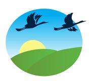 Uccelli che sorvolano i campi di verde - illustrazione Royalty Illustrazione gratis
