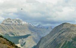 Uccelli che sorvolano i picchi delle montagne durante il giorno nuvoloso in canadese Montagne Rocciose lungo la strada panoramica Fotografia Stock Libera da Diritti
