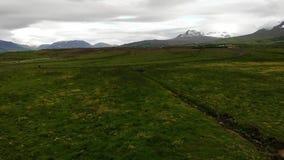 Uccelli che sorvolano i prati, una vista tipica in Islanda stock footage
