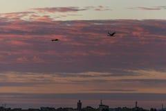 Uccelli che sorvolano la vecchia città in Meknes, Marocco Fotografie Stock