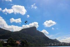 Uccelli che sorvolano Rodrigo de Freitas Lagoon Fotografia Stock Libera da Diritti