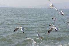 Uccelli che sorvolano un oceano Immagini Stock