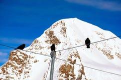 Uccelli che tengono sul cavo alle alpi dello svizzero di Jungfrau Fotografie Stock Libere da Diritti