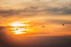 Uccelli che uguagliano l'insieme del sole Immagini Stock Libere da Diritti