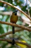 Uccelli che vivono nei prodotti naturali selvaggi in Mexiko Immagine Stock Libera da Diritti