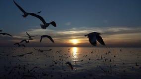 Uccelli che volano al movimento lento del mare archivi video