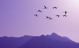 Uccelli che volano contro il paesaggio porpora nei precedenti Fotografia Stock