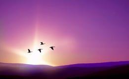 Uccelli che volano contro il paesaggio porpora nei precedenti Fotografie Stock Libere da Diritti