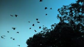 Uccelli che volano fuori dall'albero in primo mattino Fotografia Stock Libera da Diritti
