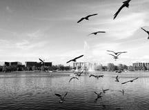 Uccelli che volano intorno al lago immagini stock