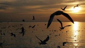 Uccelli che volano in mare nel tramonto video d archivio