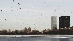 Uccelli che volano nel cielo di Manhattan fotografia stock libera da diritti