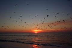 Uccelli che volano sopra il mare Fotografia Stock Libera da Diritti