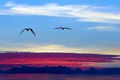 Uccelli che volano sopra la siluetta delle nuvole Fotografia Stock