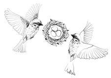 Uccelli che volano vicino al nido con le uova Fotografia Stock Libera da Diritti