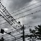 Uccelli in città Immagine Stock