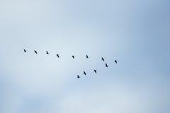 Uccelli in classico Fotografia Stock