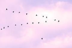 Uccelli in classico Immagini Stock Libere da Diritti
