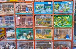 Uccelli colorati dell'animale domestico in Souq Waqif, Doha, Qatar Fotografia Stock Libera da Diritti