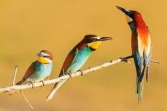 Uccelli colorati nel tramonto Immagine Stock Libera da Diritti