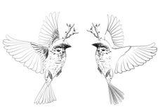 Uccelli con i corni Immagine Stock Libera da Diritti