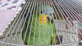 Uccelli, conosciuti popolare come gli uccelli o gli uccelli Immagini Stock