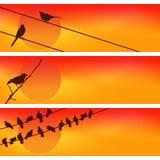 Uccelli contro il tramonto Tre vettori Fotografia Stock Libera da Diritti