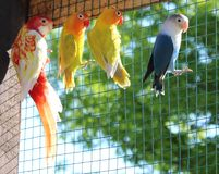 Uccelli curiosi Fotografie Stock