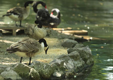 Uccelli d'alimentazione fotografie stock
