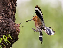 Uccelli d'alimentazione fotografia stock libera da diritti