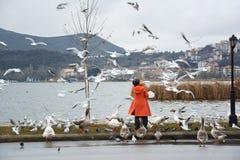 Uccelli d'alimentazione della donna Immagine Stock