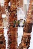 Uccelli d'alimentazione in inverno immagini stock