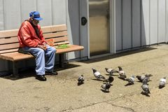 Uccelli d'alimentazione senior su Santa Cruz Municipal Wharf in Santa Cruz, CA immagini stock