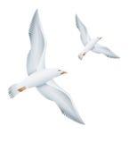Uccelli dei gabbiani di volo Fotografia Stock Libera da Diritti