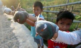 Uccelli dei piccioni Immagine Stock