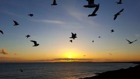 Uccelli del Barton-su-mare Fotografia Stock