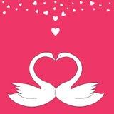 Uccelli del biglietto di S. Valentino Fotografia Stock