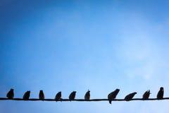 Uccelli del cavo Fotografia Stock