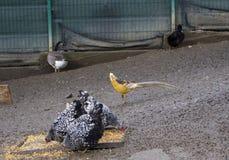 Uccelli del cortile Fotografia Stock