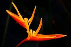 Uccelli del fiore di paradiso Immagini Stock Libere da Diritti