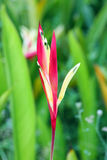 Uccelli del fiore di paradiso Fotografia Stock Libera da Diritti