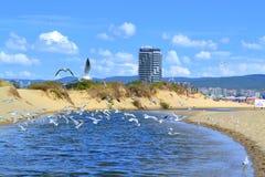 Uccelli del fiume della spiaggia di estate Fotografie Stock