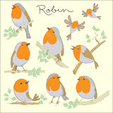 Uccelli del fumetto Insieme di Robin Fotografie Stock