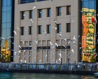 Uccelli del gabbiano che volano al pilastro fotografia stock