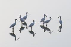 Uccelli del gruppo fotografie stock libere da diritti