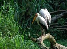 Uccelli del nostro mondo Fotografia Stock Libera da Diritti