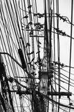 Uccelli del piccione che si siedono in una fila sulla torre della trasmissione e sui cavi, stile in bianco e nero dell'immagine a Fotografia Stock Libera da Diritti