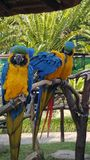 Uccelli del SA * parco fotografia stock