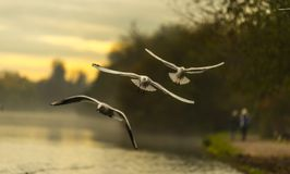 Uccelli dell'albero che pilotano il lago di mattina Fotografia Stock Libera da Diritti
