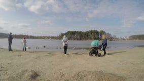Uccelli dell'anatra e del cigno dell'alimentazione della famiglia sul lago congelato in primavera 4K stock footage